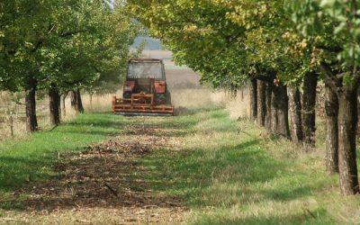 Tavaszi munkák a gyümölcsösben – a talajművelés