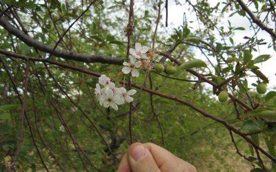 Virágból termés – a csoda, testközelből!