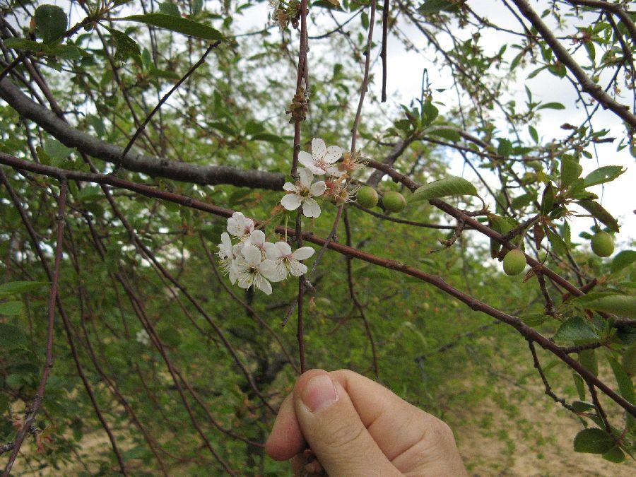Virágból termés